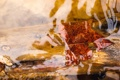 Картинка листья, вода, макро
