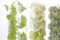 Картинка белый, цветы, прозрачный, коробка, яблоки, растения
