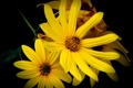 Картинка цветы, желтый, черная