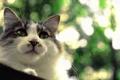 Картинка кошка, глаза, кот, взгляд, фон, кошак