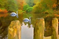Картинка озеро, картина, лебеди