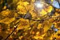 Картинка осень, листья, макро, ветка, размытость, жёлтые