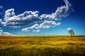 Картинка пейзаж, поле, небо, дерево