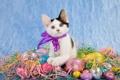Картинка кот, яйцо, бант, котенок, кошка