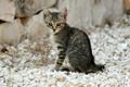 Картинка кот, камни, котенок, полосатый, cat, серый, кошка