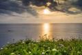 Картинка море, пейзаж, закат, цветы, тучи, природа