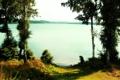 Картинка вода, озеро, березы