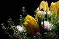 Картинка flowers, Roses, Tulips
