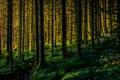 Картинка лес, деревья, ручей, склон