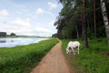 Картинка дорога, пейзаж, река, конь