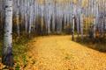 Картинка дорога, осень, листья, деревья, природа