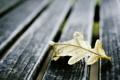 Картинка листья, макро, доски, осеннний лист