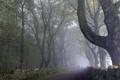 Картинка пейзаж, деревья, дорога, туман