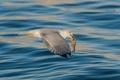 Картинка море, птица, рыба, чайка