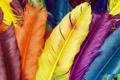 Картинка птицы, перья, разноцветные перышки