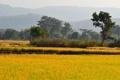 Картинка трава, деревья, пейзаж, холмы