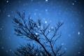 Картинка звезды, ночьное небо, небо, ночьное боке, природа, ночь, дерево