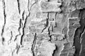 Картинка макро, дерево, обои, Ч/б, текстура, кора