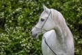 Картинка конь, лошадь, грация, (с) OliverSeitz