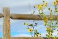 Картинка небо, цветы, забор, растение