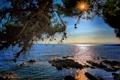 Картинка море, солнце, лучи, дерево, ветви