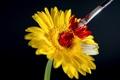 Картинка цветок, краска, кисточка, кисть