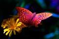 Картинка цветок, бабочка, flower, butterfly