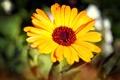 Картинка цветок, желтый, лепестки