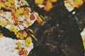 Картинка листья, осень, желтые, оранжевые, листва, дерево
