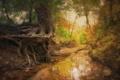 Картинка осень, природа, дерево