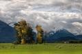 Картинка widescreen wallpapers, фотографии, овечка, стадо, пастбище, обои, овцы