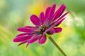 Картинка стебель, цветок, растение, лепестки, природа