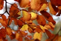 Картинка листья, оранжевый, ветки, жёлтый, scotto (devart)