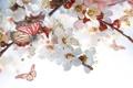 Картинка цветы, бабочка, веточки