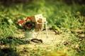 Картинка трава, цветы, велосипед, Danbo