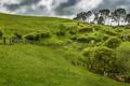 Картинка Матамат, трава, деревья, склон, Северный остров, забор, Новая Зеландия