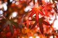 Картинка осень, лес, листья, природа