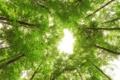 Картинка листья, деревья, зеленый, солнечный свет