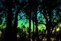 Картинка небо, деревья, силуэт, зарево