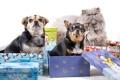 Картинка собаки, кот, обработка, подарки, коробки, разные вместе