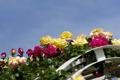 Картинка небо, цветы, розы, арка