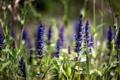 Картинка лес, цветы, природа, Зелень, весна, фиолетовые