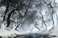 Картинка зима, белый, снег, деревья, ветки