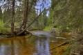 Картинка лес, деревья, река, камни