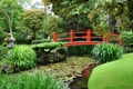 Картинка зелень, трава, деревья, пруд, камыши, сад, мостик