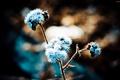 Картинка цветы, природа, голубой, обои