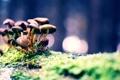 Картинка мох, грибы, трава, макро