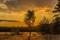 Картинка поле, дерево, вечер