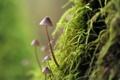 Картинка макро, природа, грибы, мох