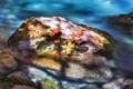 Картинка осень, листья, река, камень